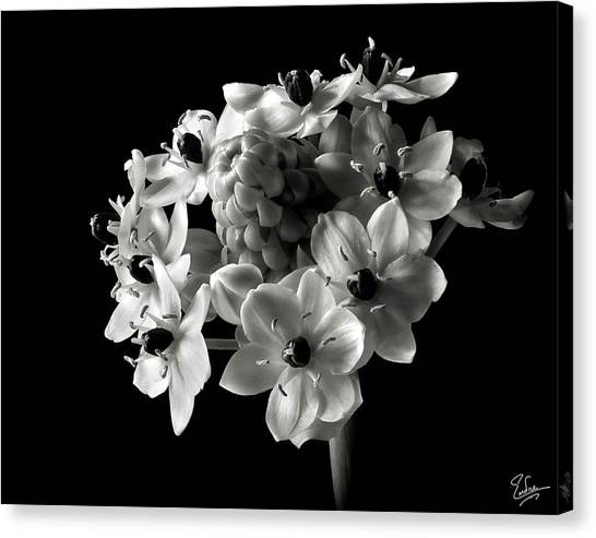 Star Of Bethlehem In Black And White Canvas Print