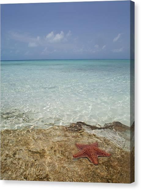 Carribbean Canvas Print - Star Paradise by Betsy Knapp