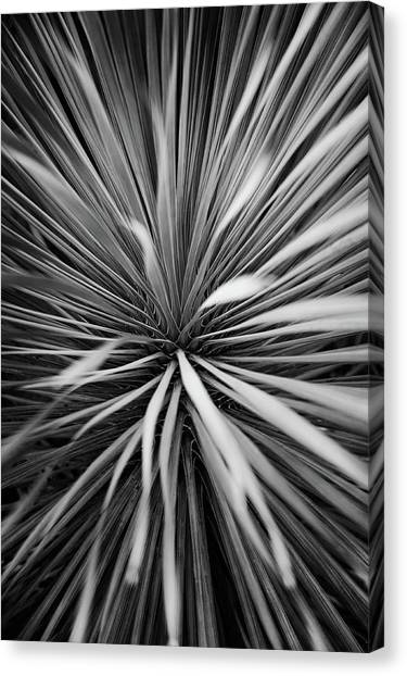 Arid Canvas Print - Starburst by Scott Norris