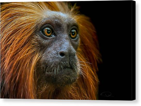Primates Canvas Print - Stare Down by Paul Neville