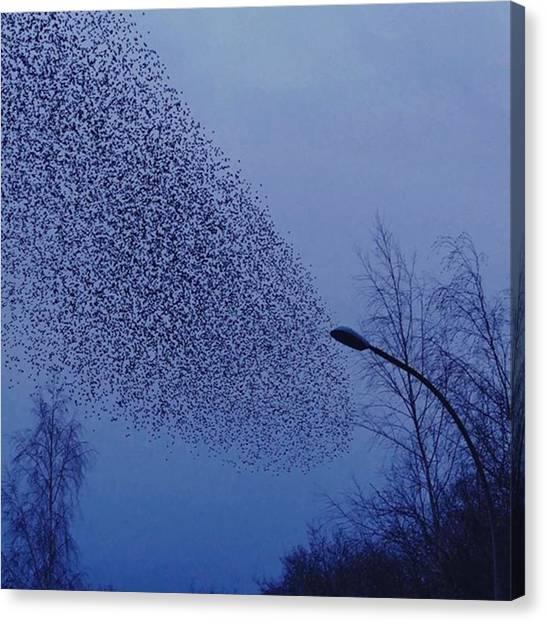 Starlings Canvas Print - #stare In Der Abenddämmerung 🐥 by Carola Enning