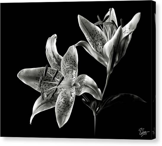 Stargazer Lily In Black And White Canvas Print