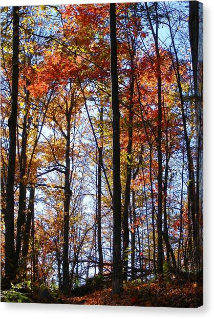 Stark Contrast Canvas Print by Dave Martsolf