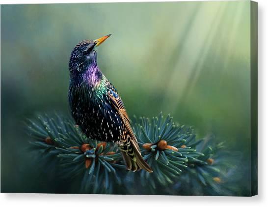 Starling Canvas Print