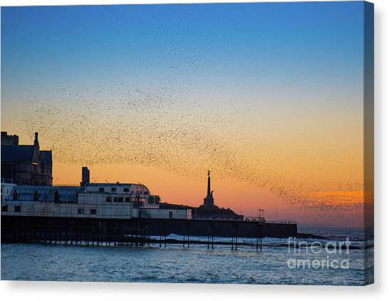 Starlings At Sunset In Aberystwyth Canvas Print