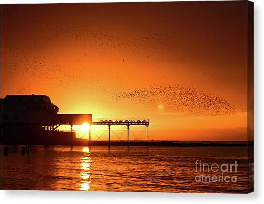 Starlings At Sunset Over Aberystwyth Pier Canvas Print