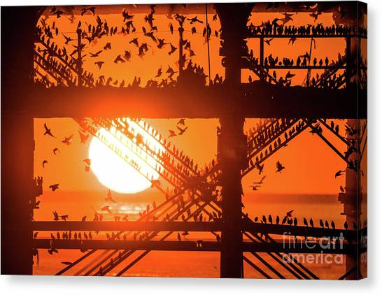 Starlings At Sunset Under Aberystwyth Pier Canvas Print
