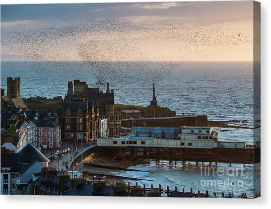 Starlings Over Aberystwyth On The West Wales Coast Canvas Print