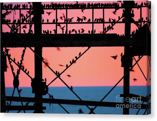 Starlings Under Aberystwyth Pier Canvas Print