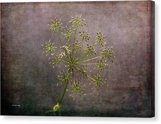 Canvas Print featuring the photograph Starry Flower by Randi Grace Nilsberg