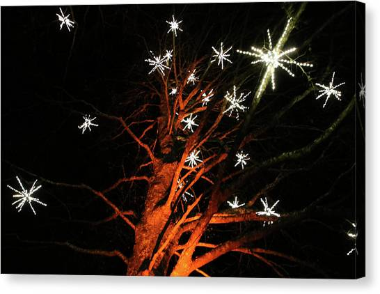 Stars In The Tree Canvas Print