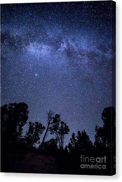 Verde Canvas Print - Stars Over Trees At Mesa Verde by Twenty Two North Photography