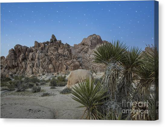 Mojave Desert Canvas Print - Stars Shining Over Indian Cove by Juli Scalzi