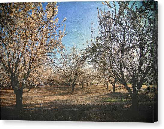 Fruit Trees Canvas Print - Starting Over by Laurie Search