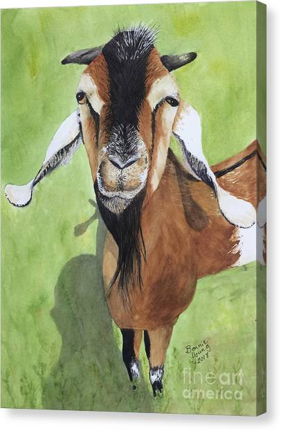 Cantankerous Canvas Print - Statler by Bonnie Young