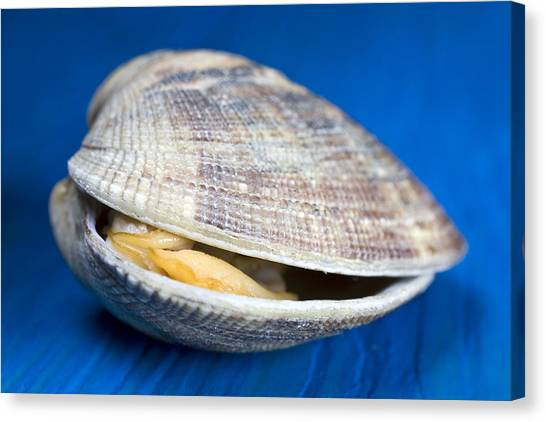 Clams Canvas Print - Steamed Clam by Frank Tschakert