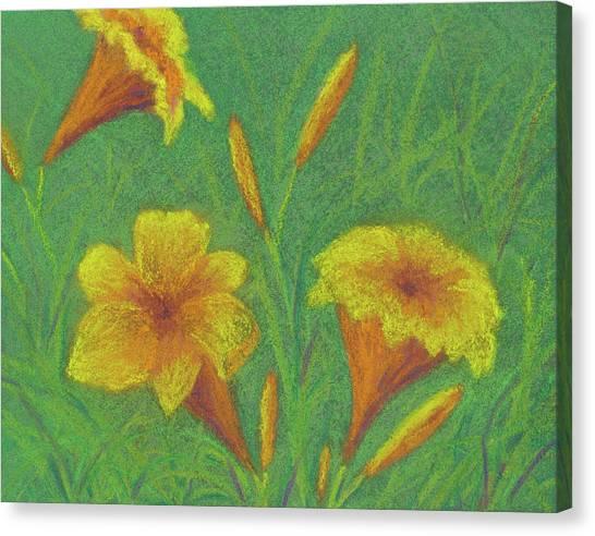 Stella D'oro #2 Canvas Print
