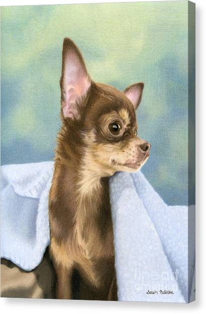 Chihuahuas Canvas Print - Stella by Sarah Batalka