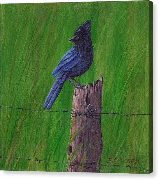 Stellar's Jay Canvas Print by SueEllen Cowan