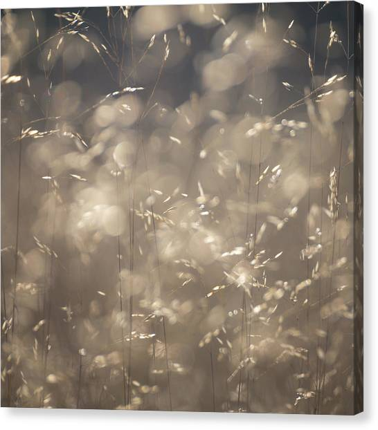 Sherwood Forest Canvas Print - Stems by Chris Dale