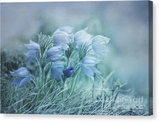Yukon Canvas Print - Stick Together by Priska Wettstein