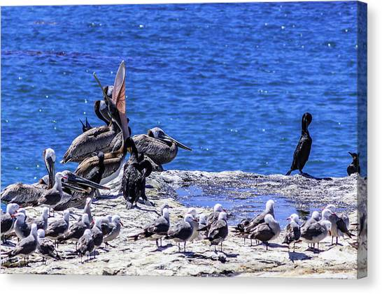 Pelican Sticking His Neck Out Canvas Print