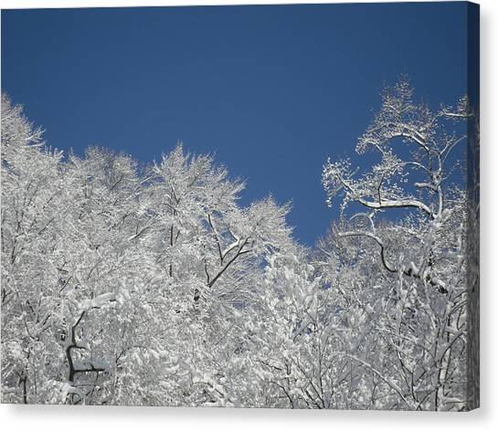 Sticky Trees Canvas Print by Michael Piotrowski