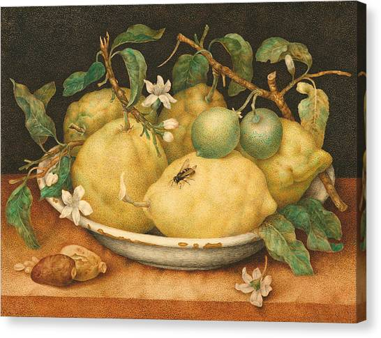 Wasp.insect Canvas Print - Still Life With A Bowl Of Citrons by Giovanna Garzoni