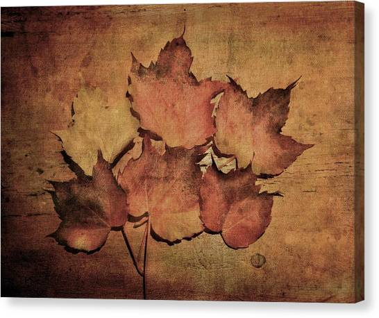 Still Life With Leaves Canvas Print