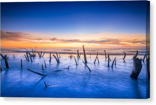 Pine Cones Canvas Print - Still Standing by Marvin Spates