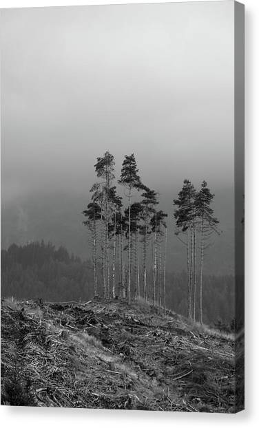 Still Standing Canvas Print