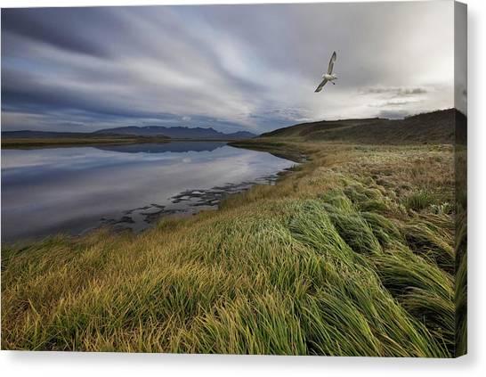 Water Birds Canvas Print - Stillness by Bragi Ingibergsson -