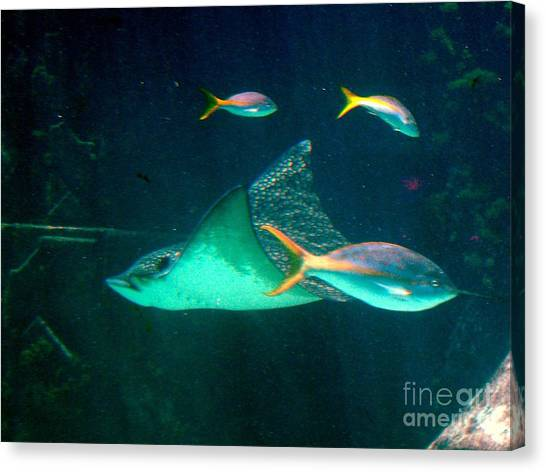 Sting Ray Canvas Print