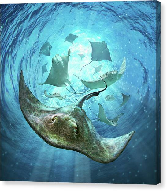 Ocean Life Canvas Print - Sting Rays by Jerry LoFaro