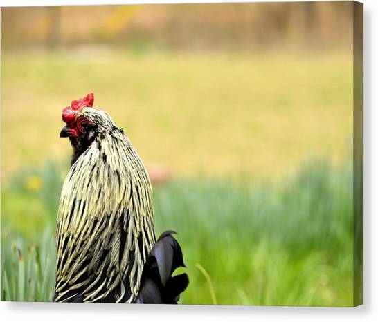Stink Eye Canvas Print
