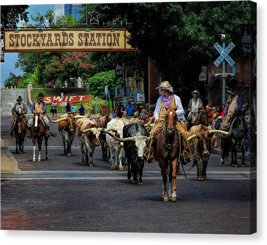Stockyards Cattle Drive Canvas Print