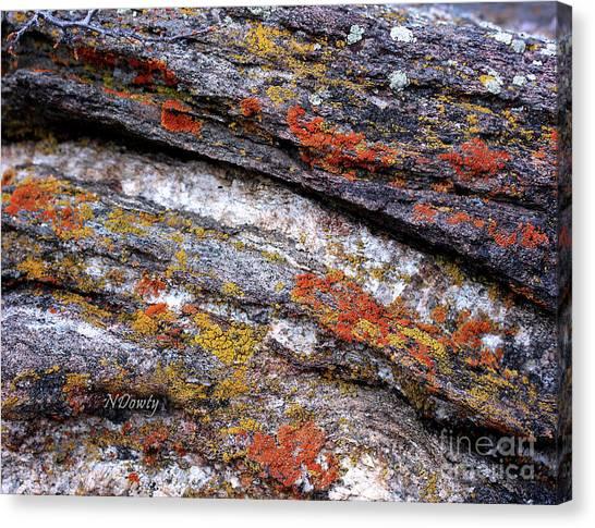 Stone And Lichen Canvas Print