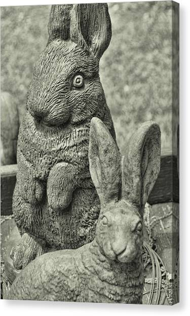 Stone Bunnies Canvas Print by JAMART Photography