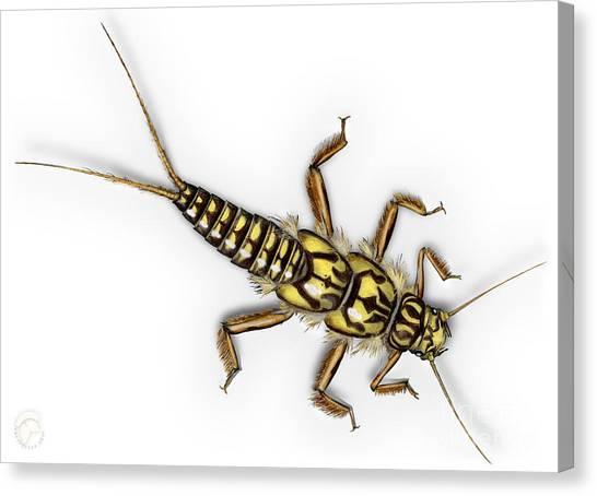 Stonefly Larva Nymph Plecoptera Perla Marginata - Steinflue -  Canvas Print