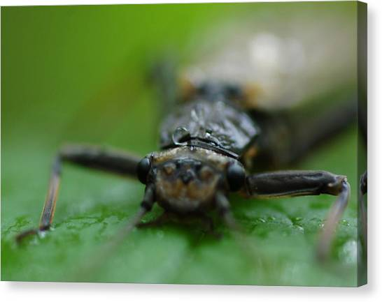 Stonefly Canvas Print by Scott Gould