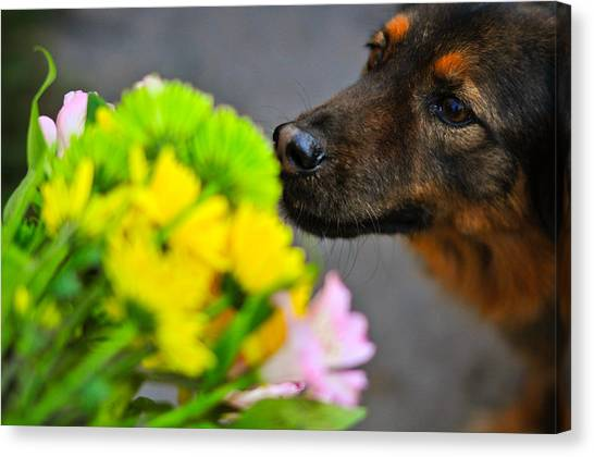 Stop And Smell The Flowers Canvas Print by Mandy Wiltse