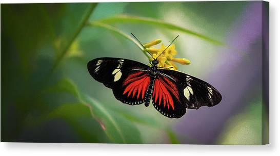Butterfly, Stop And Smell The Flowers Canvas Print