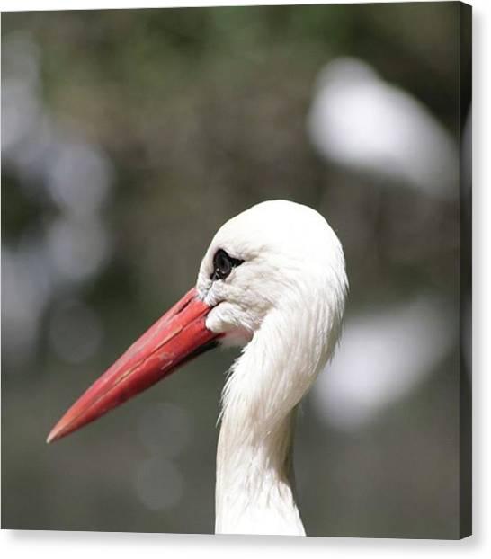 Storks Canvas Print - Stork #cicogna #stork #bird #white by Sara Ricci