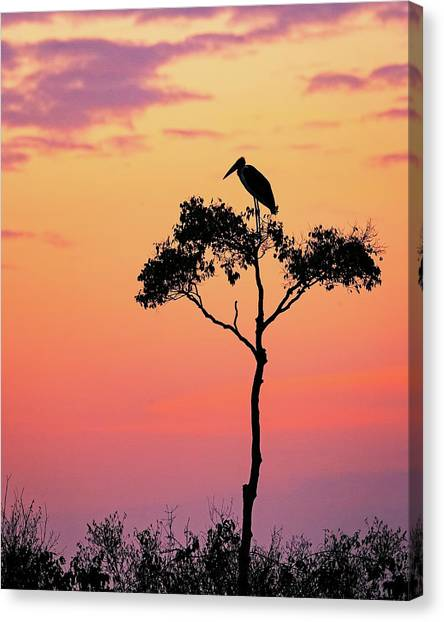 Storks Canvas Print - Stork On Acacia Tree In Africa At Sunrise by Susan Schmitz