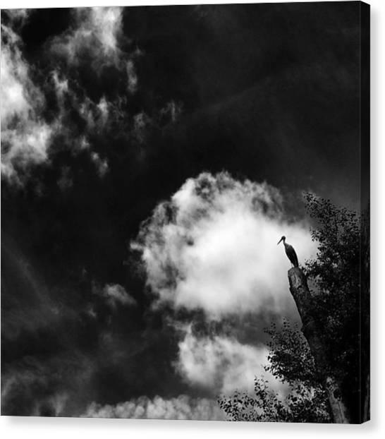 Water Birds Canvas Print - Stork #stork #bird #tree #animals #sky by Rafa Rivas