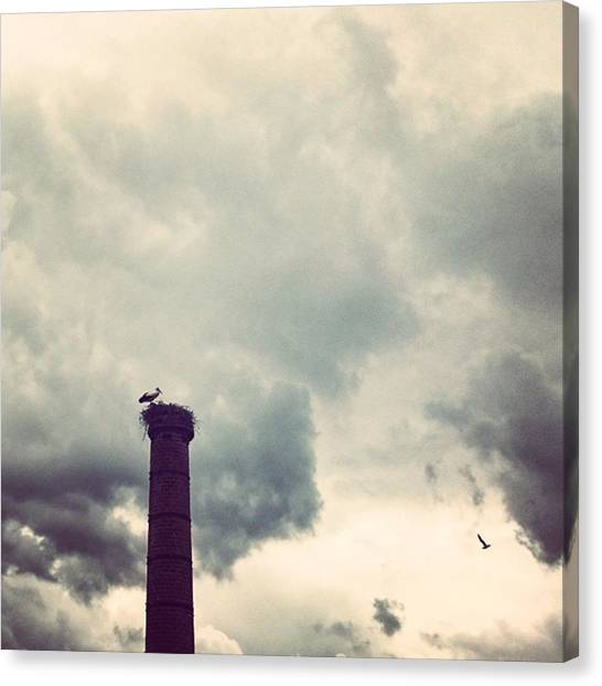 Storks Canvas Print - #storks Babysitting With A Great View :) by Maayke Damen
