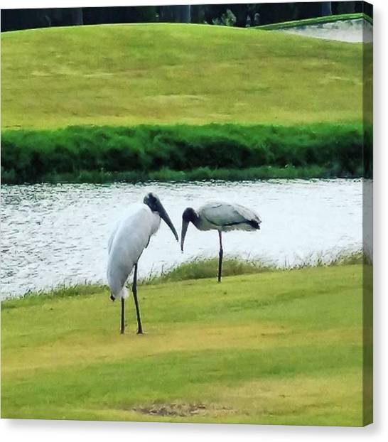 Storks Canvas Print - Storks On The Golf Course by Rg Field