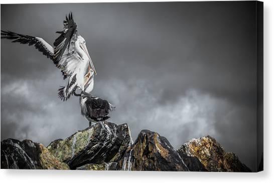 Storm Birds Canvas Print