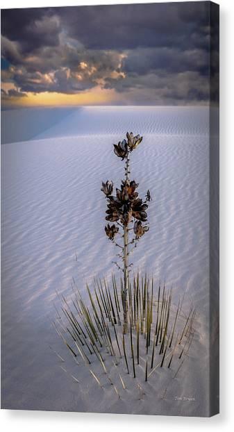 Storm Light At White Sands Canvas Print
