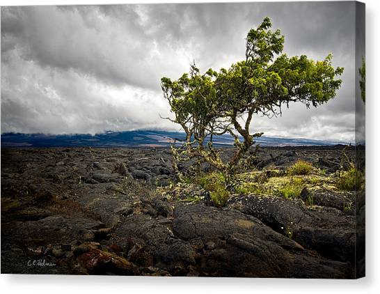 Mauna Loa Canvas Print - Storm Moving In by Christopher Holmes